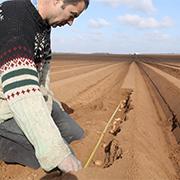 Le producteur vérifie l'écartement entre les plants de Ratte du Touquet