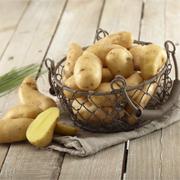 La pomme de terre Ratte du Touquet